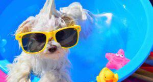 come rinfrescare il cane in estate
