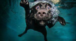 cane al mare