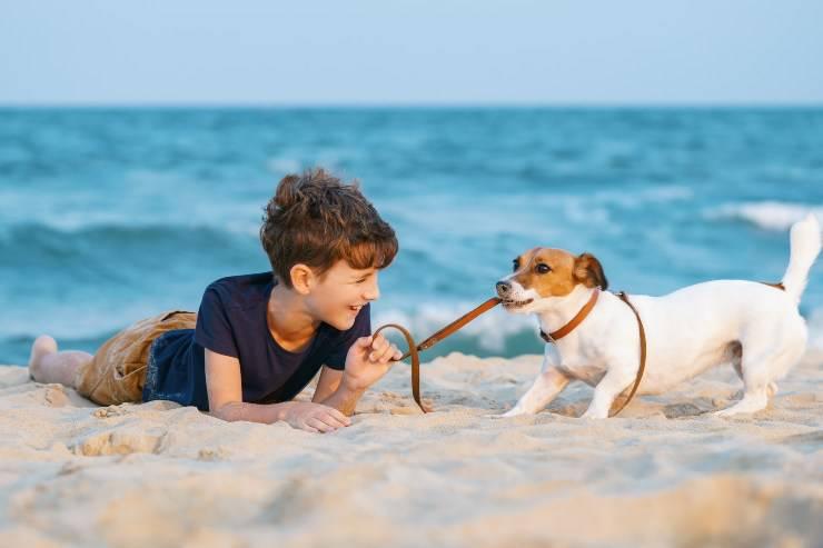 cane e bambino al mare