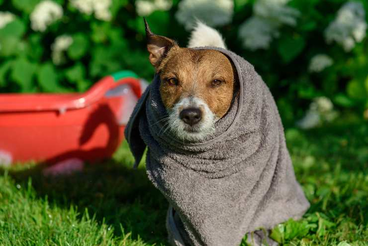 cane con asciugamano