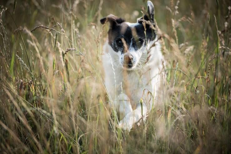 cane e forasacchi