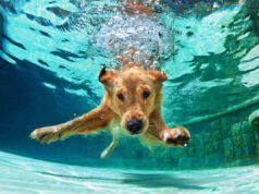 Il cane ha bevuto l'acqua della piscina
