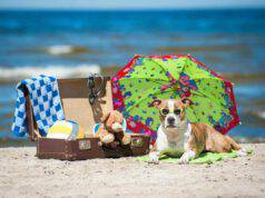 Accessori per il cane in spiaggia