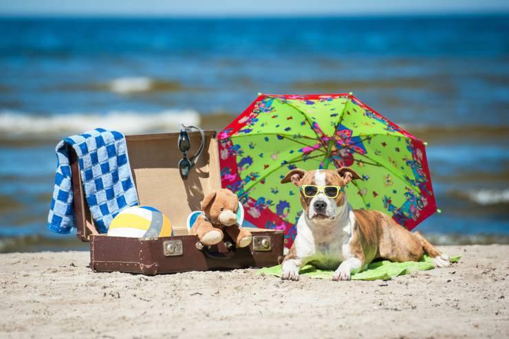 Accessori in spiaggia per il cane