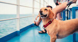 Viaggiare con il cane in nave