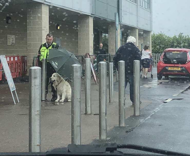 guardia protegge cane pioggia
