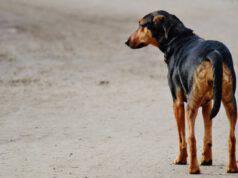 cane solo