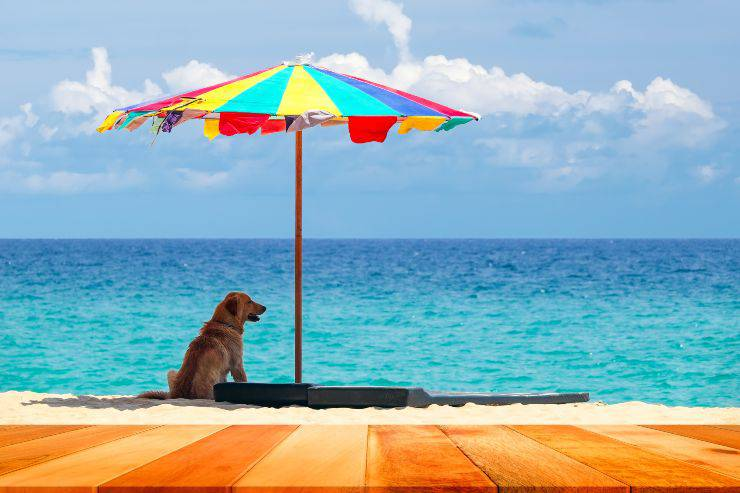cane sotto ombrellone