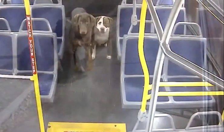 autista salva cani