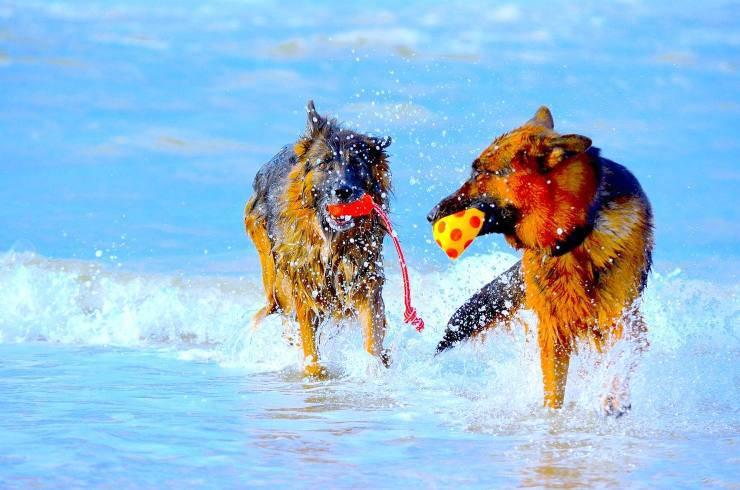 cani al mare