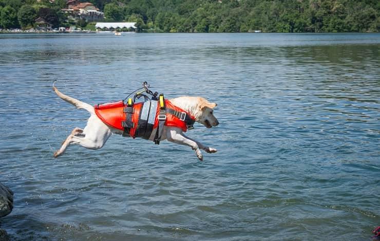 cane bambino mare fregene