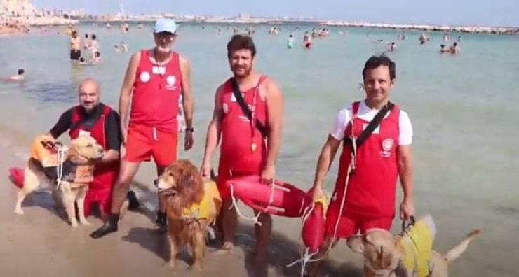 I tre cani bagnino in servizio a Bari nel video dell'estate 2019