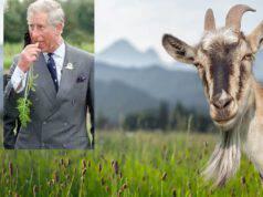 Carlo e la capra