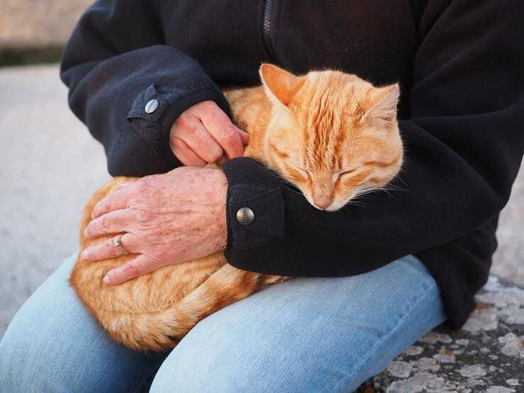 Gatto in braccio (Foto Pixabay)