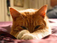 Il micio scontroso (Foto Pixabay)