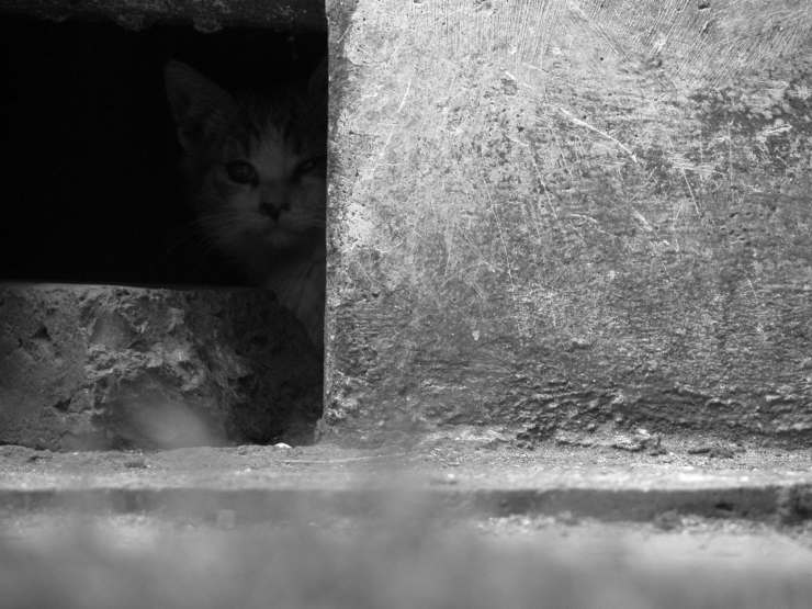 Il gatto ha paura di uscire