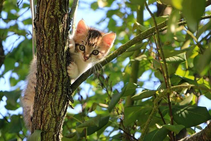 Gatto in montagna (Foto Pixabay)