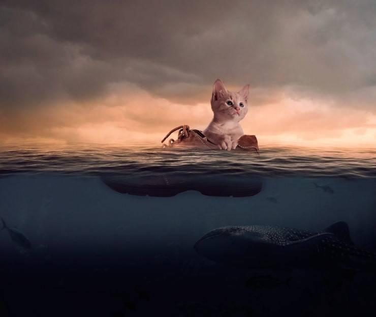 Il gatto sta annegando