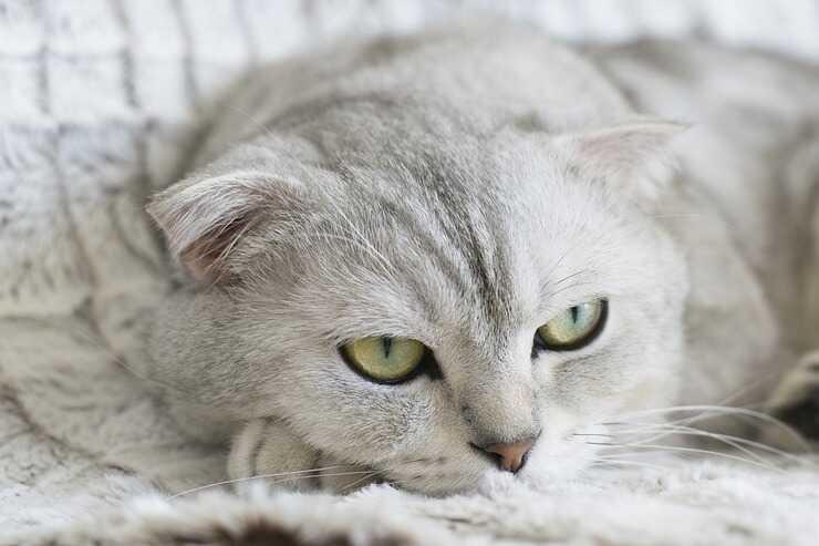 Come far perdere al gatto le cattivi abitudini
