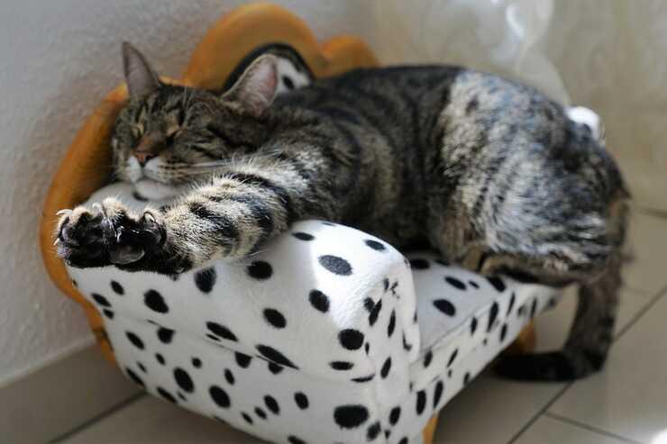 gatto che si stiracchia (Foto Pixabay)