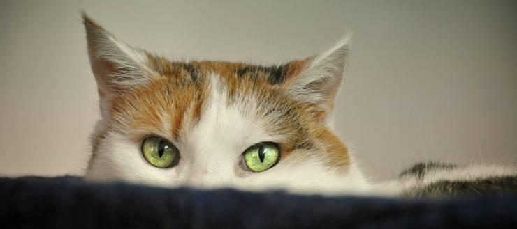I gatti giocano a nascondino