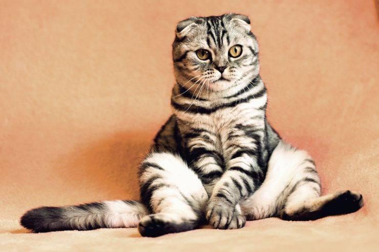 Il gatto fa pipì sui vestiti
