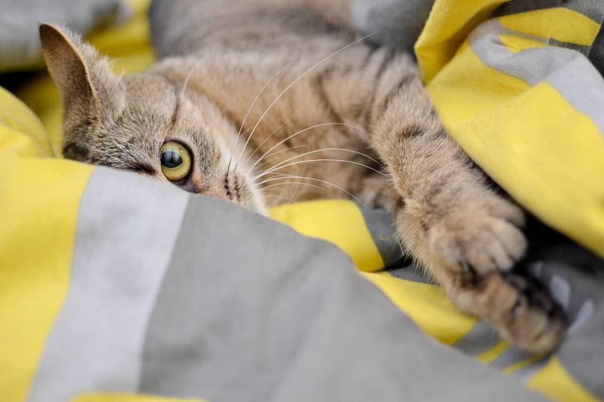 Come rafforzare il sistema immunitario del gatto (Foto Pixabay)