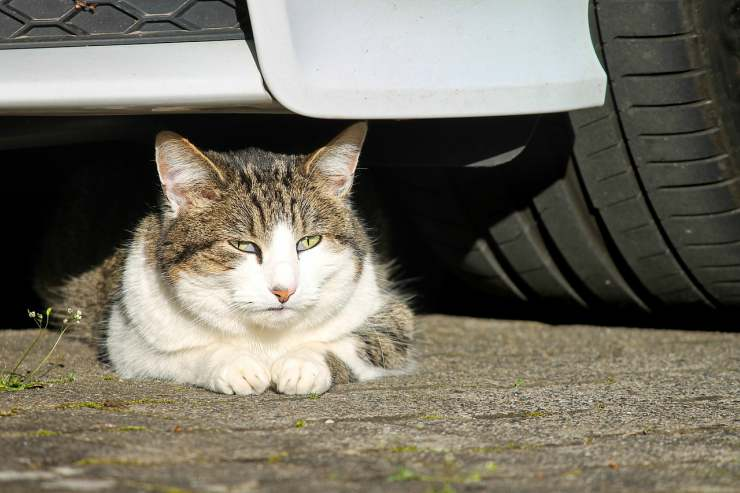 Micio sotto la macchina