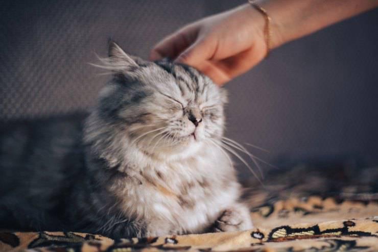 Il gatto sente la mancanza del padrone