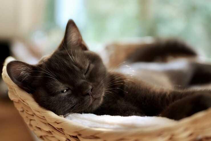 Gatto in condominio (Foto Pixabay)