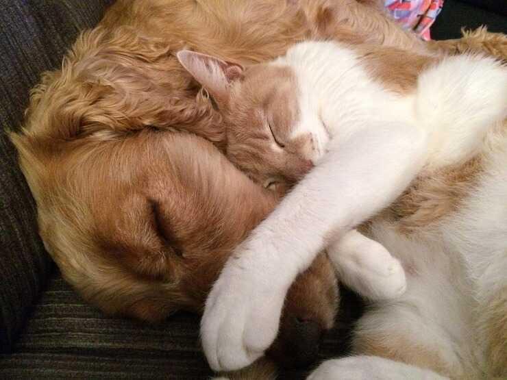 cane e gatto dormono insieme (Foto Pixabay)