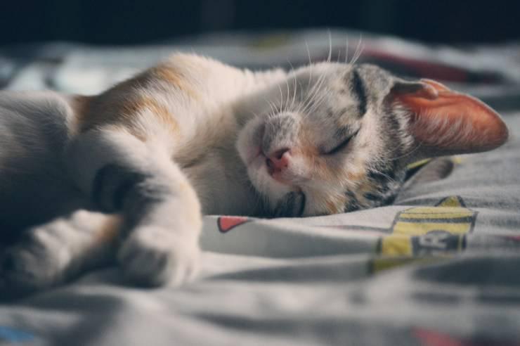 Perchè il gatto dorme sui nostri vestiti? Cosa lo attira tanto dei nostri abiti