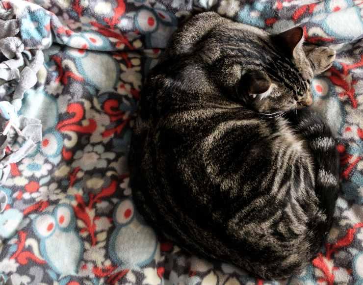 Perchè il gatto dorme sui nostri vestiti?