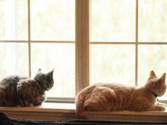 Migliori razze di gatti da appartamento