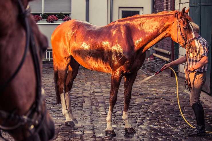 colpo di calore cavallo