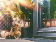 Consigli per proteggere il gatto in estate