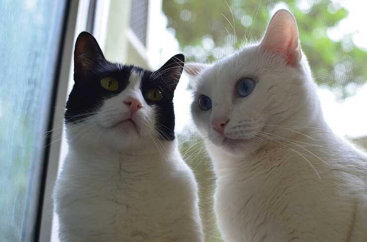 Convivenza tra due gatti