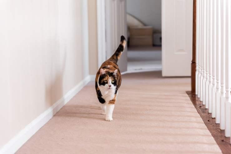 cosa fa il gatto da solo in casa