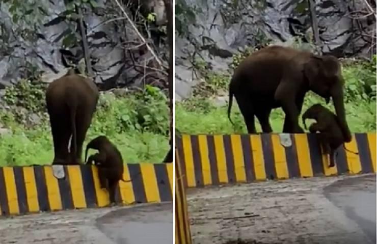 cucciolo elefante strada