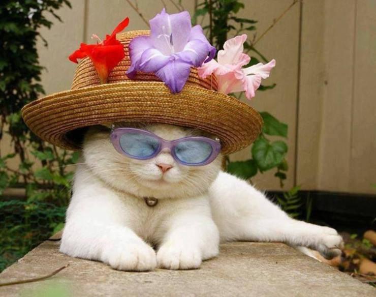 Come tenere il gatto attivo questa estate e al fresco: tante idee