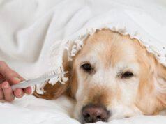 Surriscaldamento e disidratazione nel cane