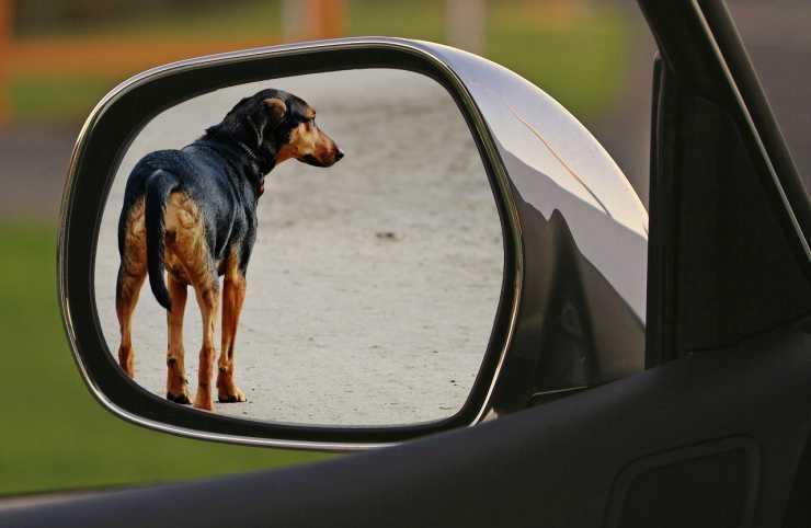 Cane visto dal finestrino dell'auto (Foto Pixabay)
