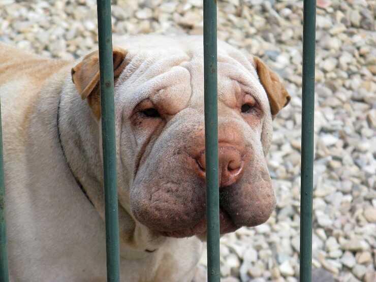 cosa rischio se il mio cane morde una persona (Foto Pixabay)