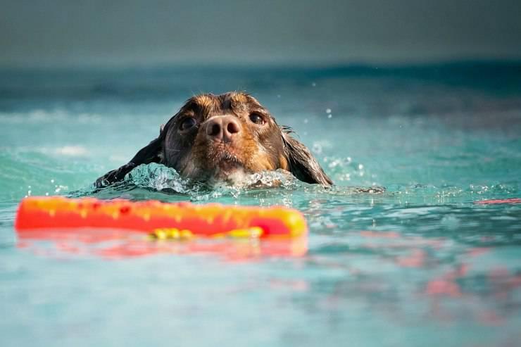 Fido nuota