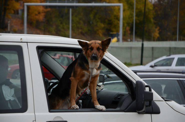 Cane fuori dal finestrino