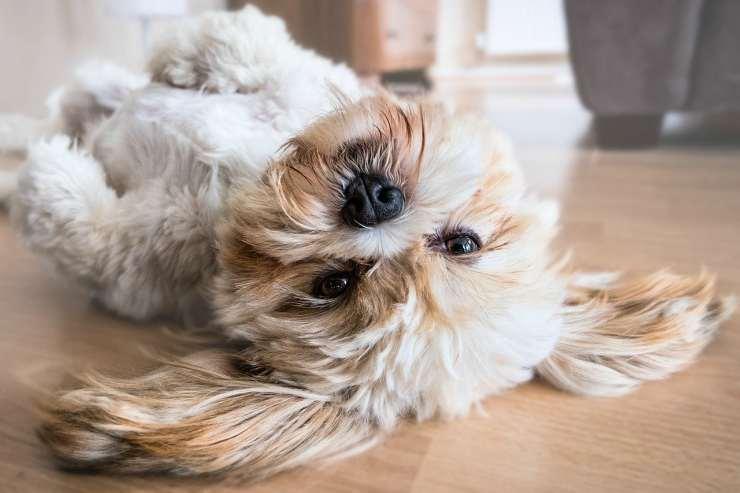 La simpatia di un cagnolino (Foto Pixabay)