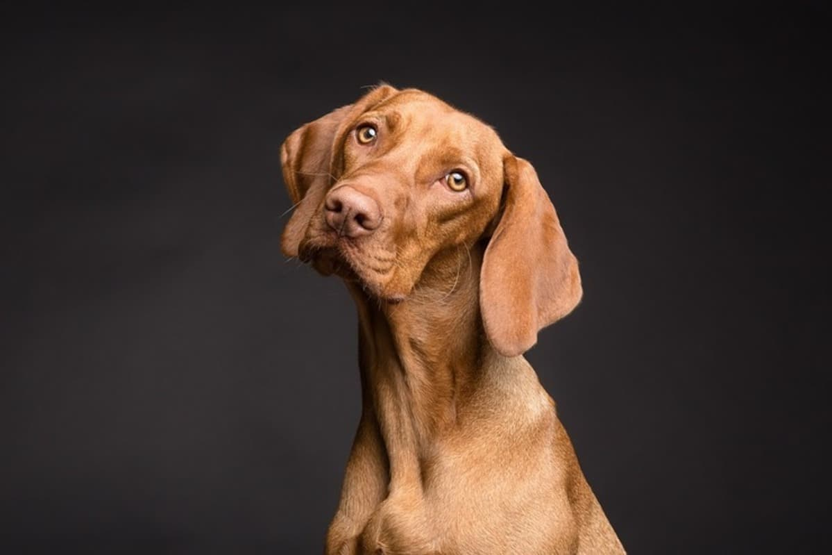 I cani riconoscono il proprio nome? (Foto Pixabay)