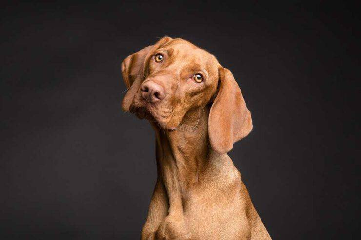 Il cane è un animale onnivoro (Foto Pixabay)