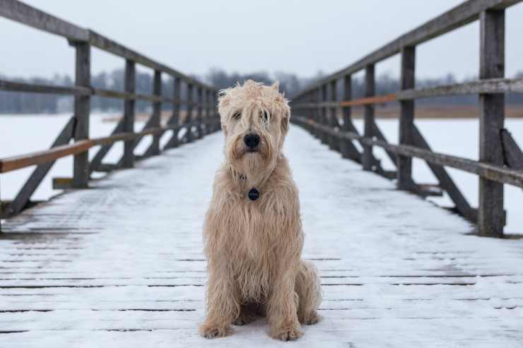 Un cane triste (Foto Pixabay)