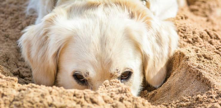 Muso nella sabbia